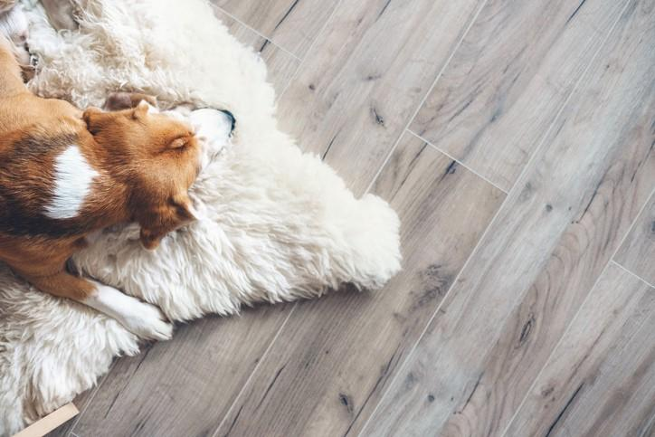 4 Reasons Why Shaw Laminate Flooring is a Great Alternative to Hardwood