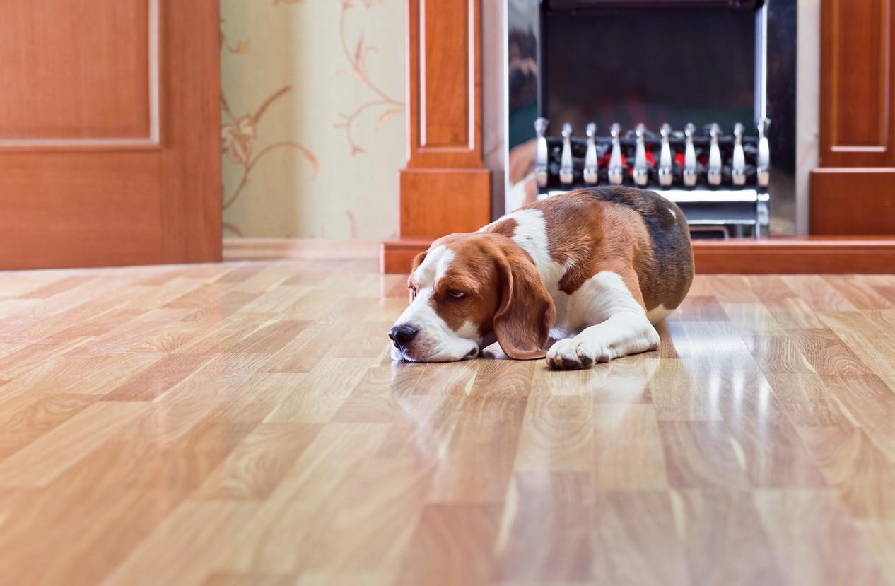 Pets and Engineered Hardwood Flooring: How to make it a Good Combination