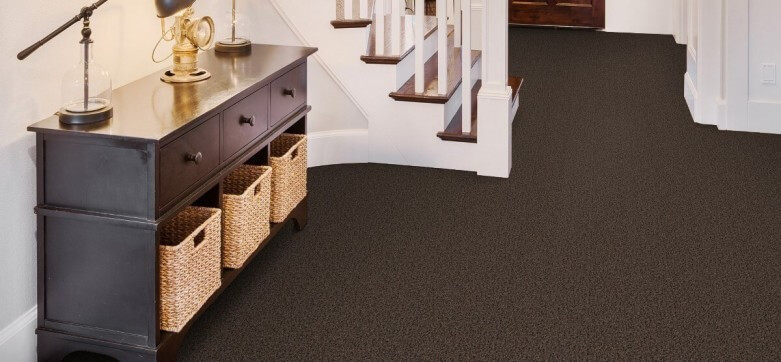 Selecting Beaulieu Carpet for Your Pet-Friendly Home